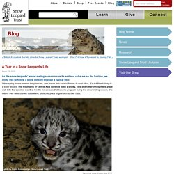 A Year in a Snow Leopard's Life