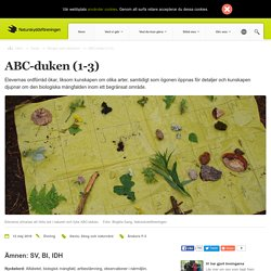 ABC-duken (1-3)