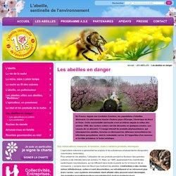 Abeille en danger et disparition abeilles