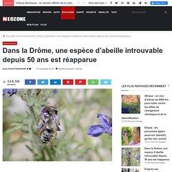 Dans la Drôme, une espèce d'abeille introuvable depuis 50 ans est réapparue
