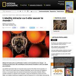 L'abeille miracle va-t-elle sauver le monde