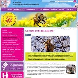 Abeille, la ruche au fil des saisons - Abeille Sentinelle