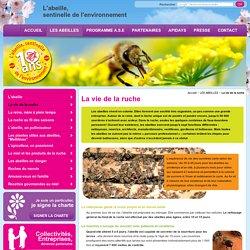 Abeille, vie de la ruche