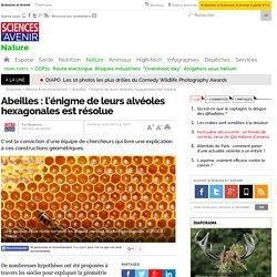 Abeilles : l'énigme de leurs alvéoles hexagonales est résolue - 18 juillet 2013
