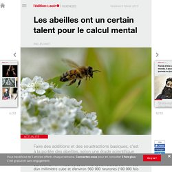 Les abeilles ont un certain talent pour le calcul mental
