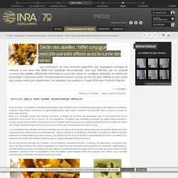 INRA 31/08/16 Déclin des abeilles : l'effet conjugué pesticide-parasite affecte aussi la survie des reines