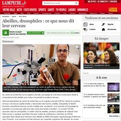 Abeilles, drosophiles : ce que nous dit leur cerveau - 21/05/2014