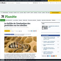 Abeilles : la faillite de l'évaluation des pesticides