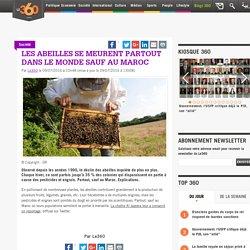 LE360_MA 09/07/16 Les abeilles se meurent partout dans le monde sauf au Maroc