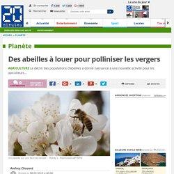 Des abeilles à louer pour polliniser les vergers