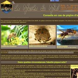 Les piqûres d'abeilles: prévention et conseils d'un apiculteur