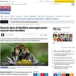 Sauver plus d'abeilles sauvages pour sauver nos récoltes