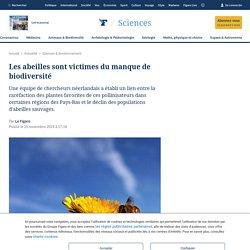 Les abeilles sont victimes du manque de biodiversité