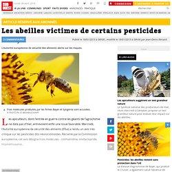 Les abeilles victimes de certains pesticides