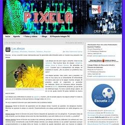 Las abejas » Pixela: Blog del Aula Digital de Primaria