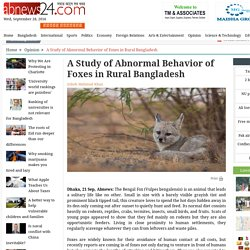 A Study of Abnormal Behavior of Foxes in Rural Bangladesh