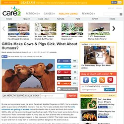 GMOs Make Cows & Pigs Sick. What About Humans?