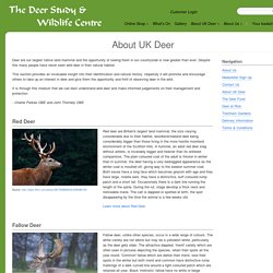 About UK Deer – The Deer Study & Wildlife Centre