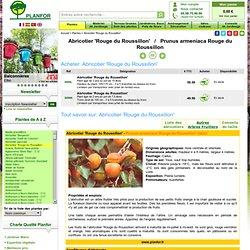 Abricotier 'Rouge du Roussillon' : vente Abricotier 'Rouge du Roussillon' / Prunus armeniaca Rouge du Roussillon
