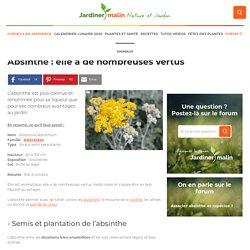 Absinthe : culture et entretien de la plante