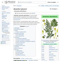 Absinthe (plante)