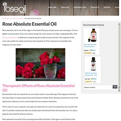 Rose Absolute Essential Oil Therapeutic Effects – Rose Oil Review