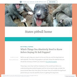Which Things You Absolutely Need to Know Before Buying Pit Bull Puppies? – States pitbull home