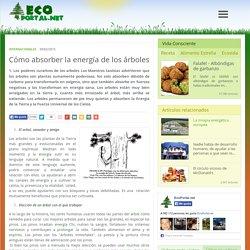 Cómo absorber la energía de los árboles
