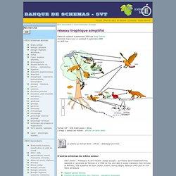 réseau trophique simplifié