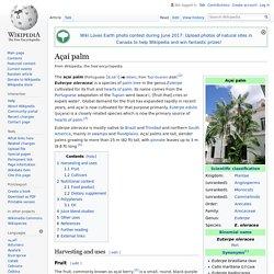 Açaí palm - Wikipedia