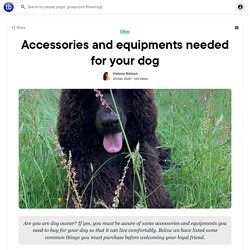 Accessories and equipments needed for your dog