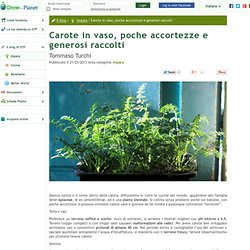 Carote in vaso, poche accortezze e generosi raccolti - Grow the Planet