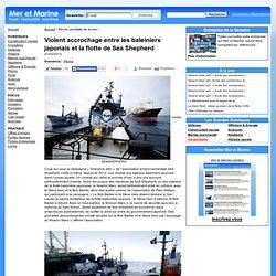 Violent accrochage entre les baleiniers japonais et la flotte de Sea Shepherd