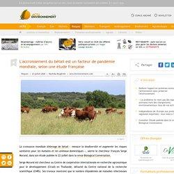 L'accroissement du bétail est un facteur de pandémie mondiale, selon une étude française