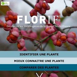 Florif, découvrez les 1600 espèces de la flore d'Île-de-France