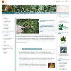 CANTON DE GENEVE 31/01/11 LES PIGEONS GENEVOIS VICTIMES D'UNE ÉPIDÉMIE SPÉCIFIQUE (paramyxovirus)