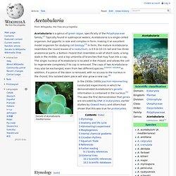 Acetabularia