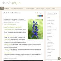 Acouphènes sur terrain anxieux - Homeophyto