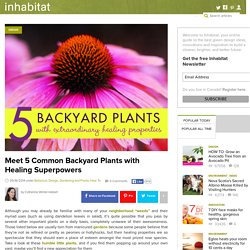 Get Acquainted with 5 Common Backyard Weeds with Remarkable Healing Properties