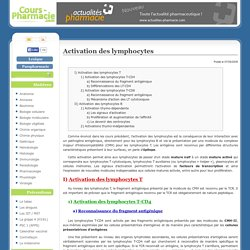 Activation des lymphocytes