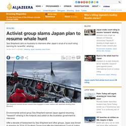 Activist group slams Japan plan to resume whale hunt