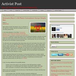 Monsanto/Bayer's GM Plants Contaminate Europe Despite Ban