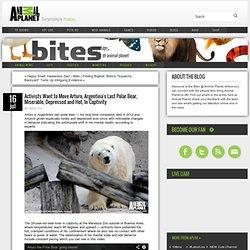 Activists Want to Move Arturo, Argentina's Last Polar Bear, Miserable, Depressed and Hot, In Captivity - Bites @ Animal Planet