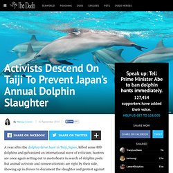 Activists Descend On Taiji To Prevent Japan's Annual Dolphin Slaughter