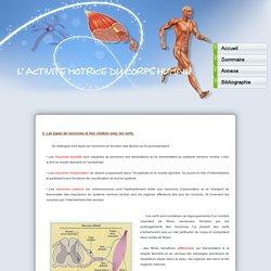 L'activité motrice du corps humain - TPE 1ère S2
