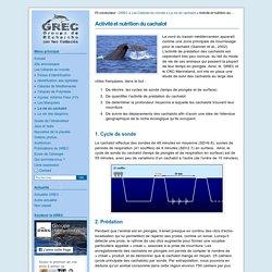 Activité et nutrition du cachalot - Le GREC