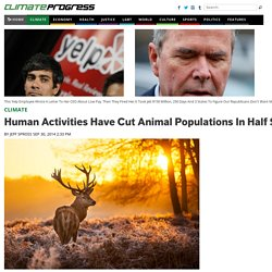 Human Activities Have Cut Animal Populations In Half Since 1970