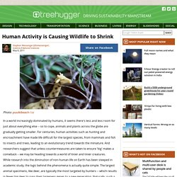Human Activity is Causing Wildlife to Shrink