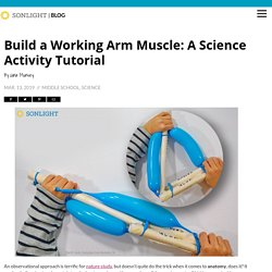 Build a Working Arm Muscle: A Science Activity Tutorial