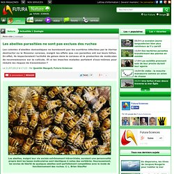 Les abeilles parasitées ne sont pas exclues des ruches